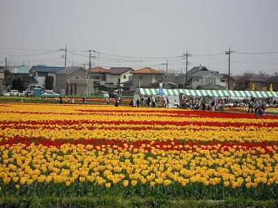 羽村の根がらみ水田