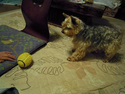 ぼくのボール