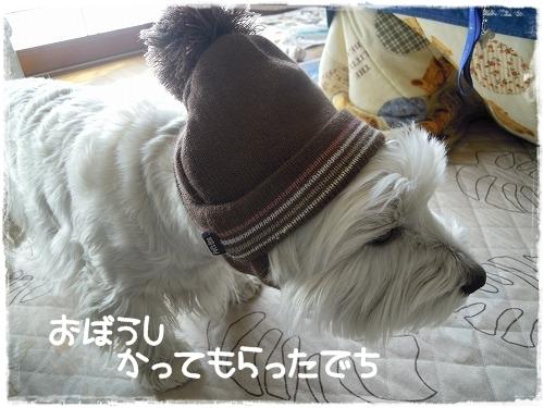 お帽子買ってもらったでち
