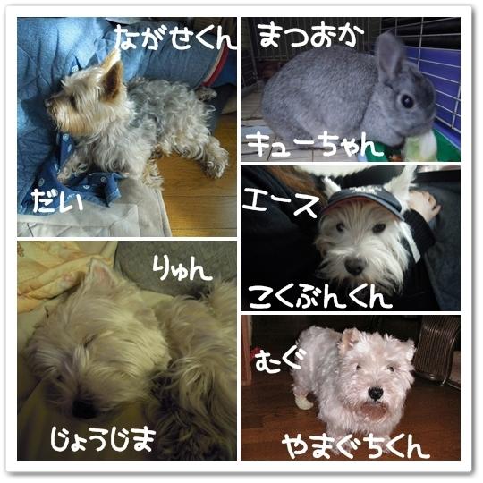 ③ もし、我が家のペット達が、TOKIOだったら!