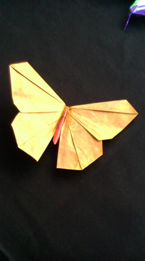 クリスマス 折り紙 折り紙 ちょうちょ 立体 : divulgando.net