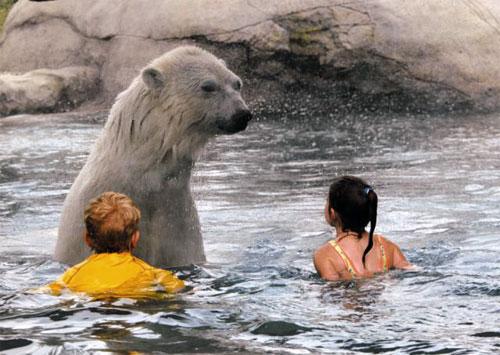 polarbearswim01.jpg