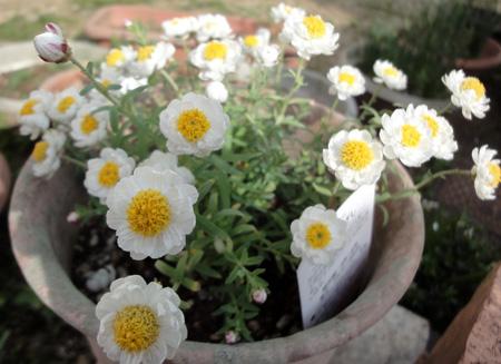 花かんざし1303