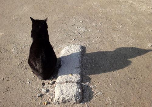 猫の背あったかそう
