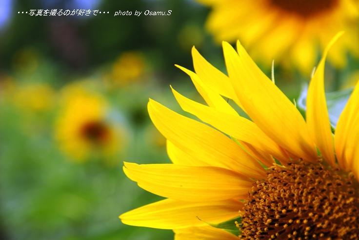 DSC02670.jpg