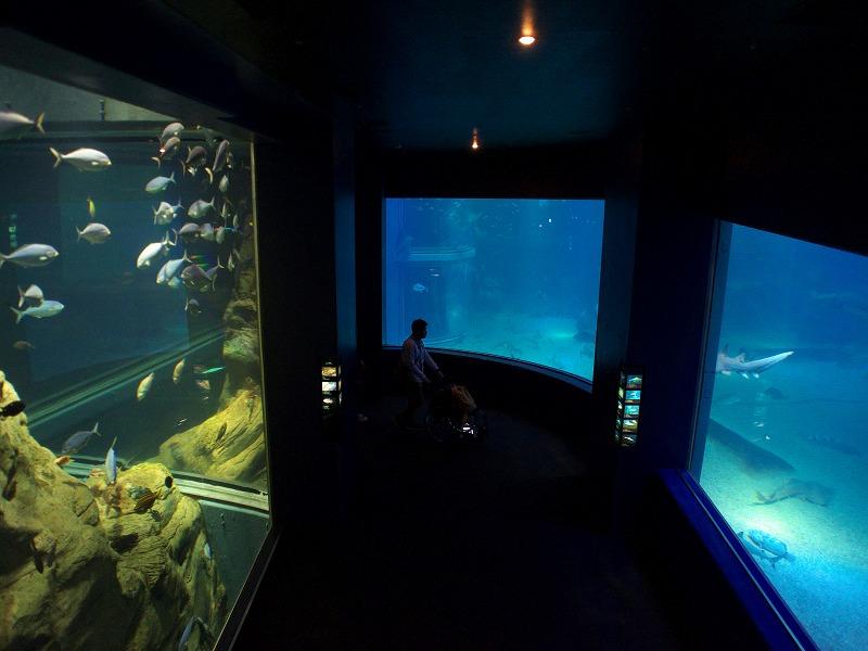 海遊館 水槽