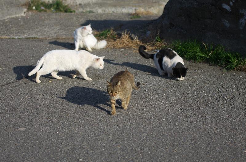 和歌山 有田川河口 猫 ねこ