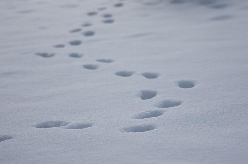 マキノ 雪 雪原