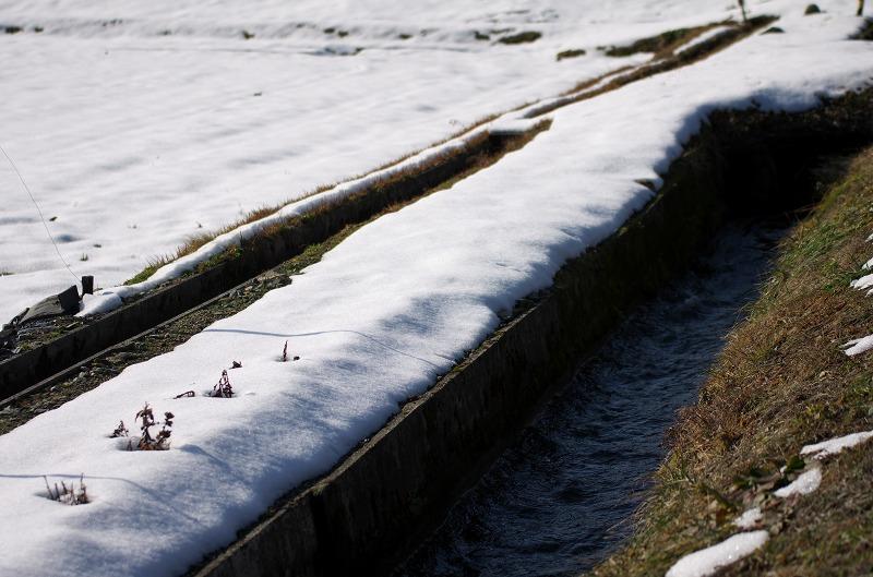 マキノ 雪 田畑