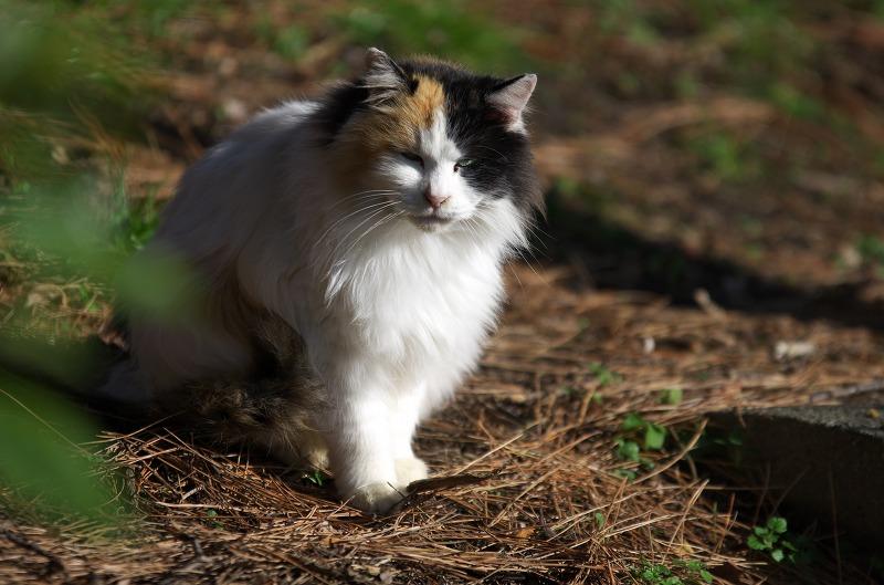 大泉緑地 冬 猫