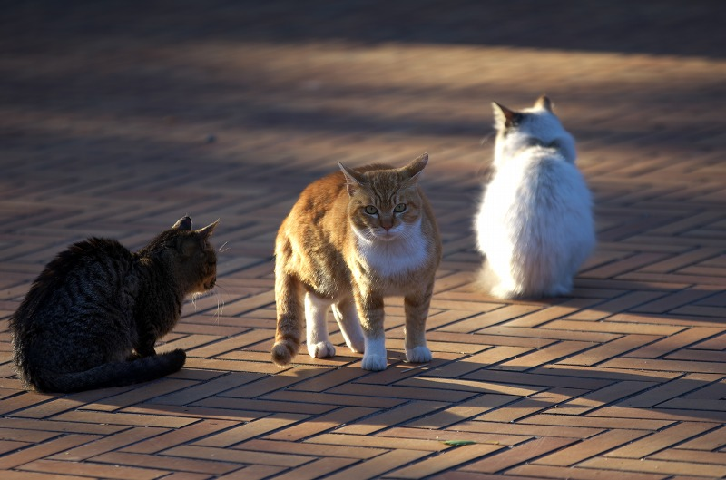 大泉緑地 冬 ネコ