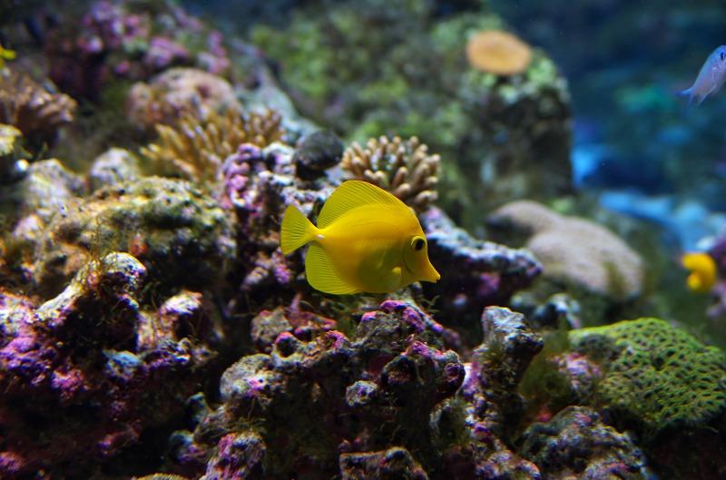 海遊館 熱帯魚