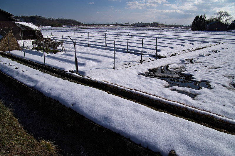 マキノ 雪 町並み 畑