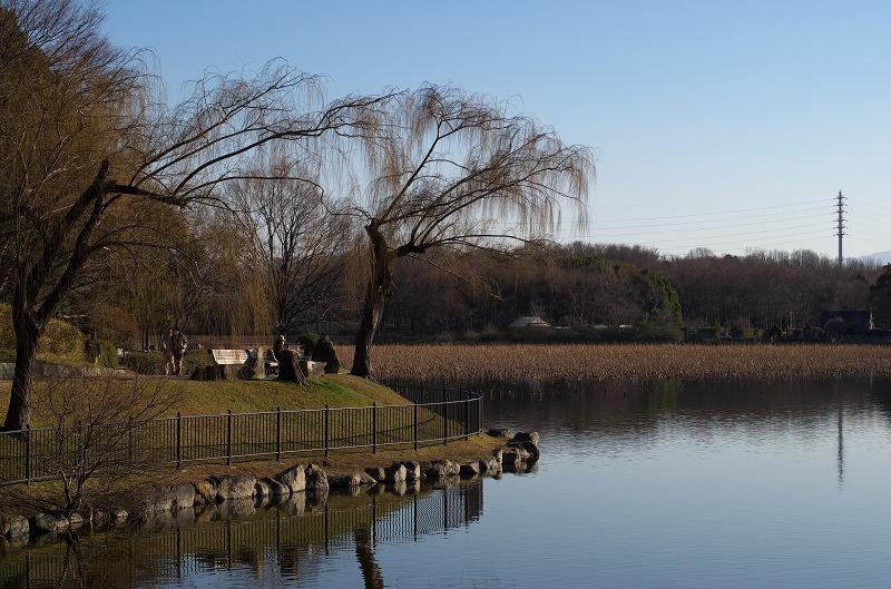 大泉緑地 冬 大池