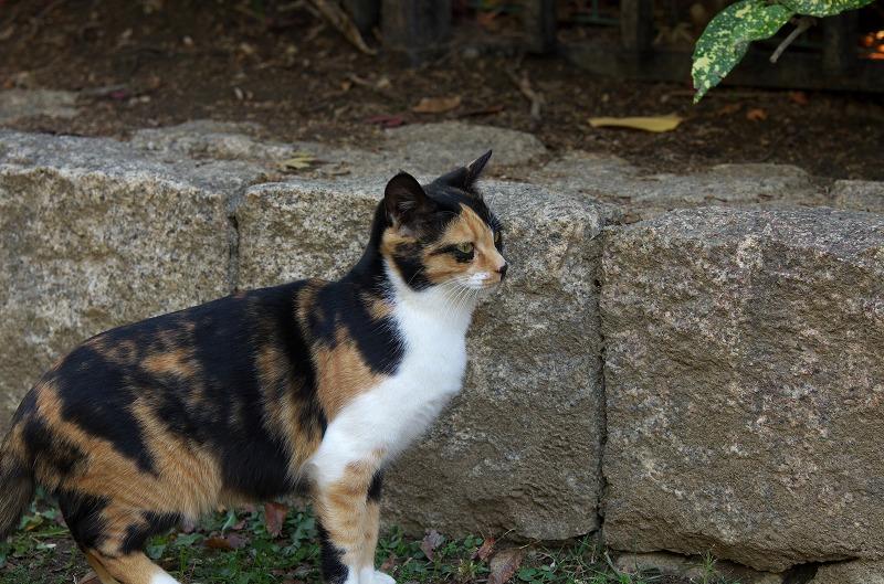 大仙公園 猫