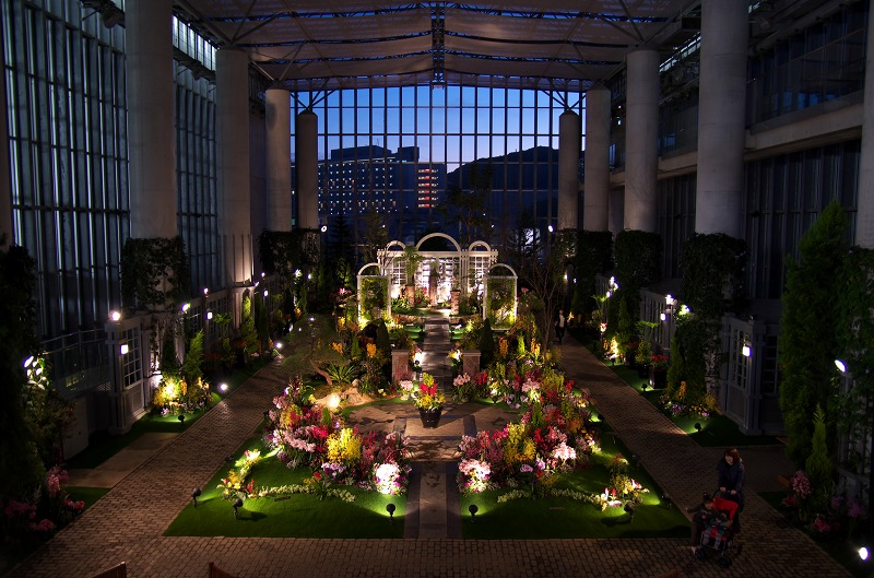 淡路夢舞台 奇跡の星の植物館 ラン展