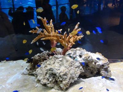 サンゴ礁①