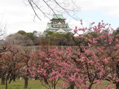 大阪城公園梅林①