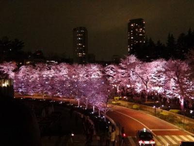 東京ミッドタウンのサクラ