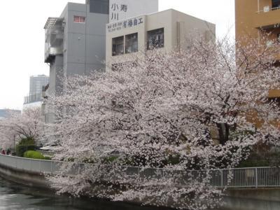 深川 大横川桜並木⑤