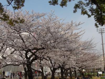 錦糸公園②