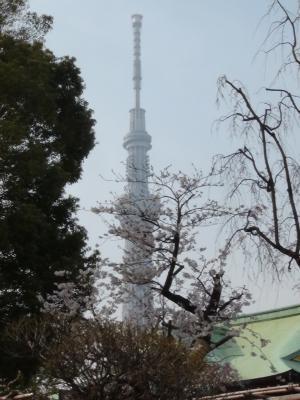 亀戸天神社からの東京スカイツリー