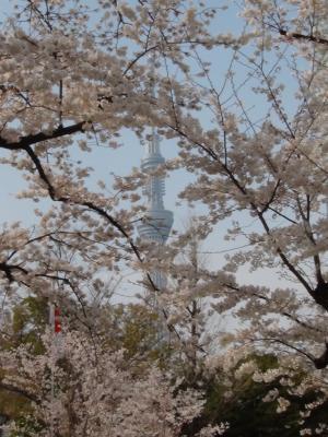 錦糸公園からの東京スカイツリー