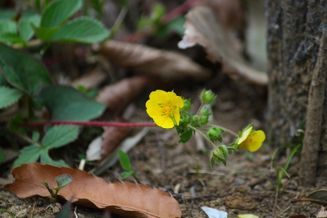 黄色い花は目立ちますね!
