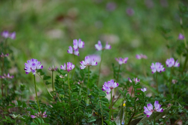 子供の頃を思い出す癒される花ですね♪
