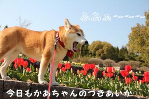 006_20110416013758.jpg
