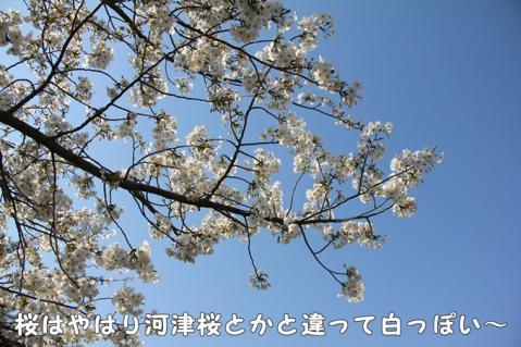026_20110416014054.jpg
