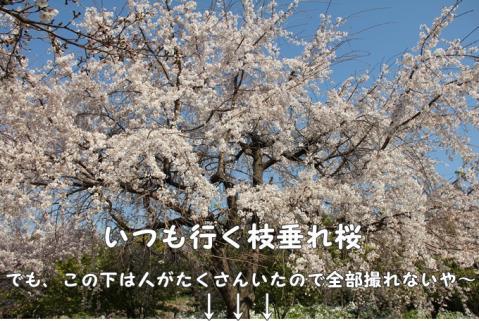 042_20110416014457.jpg