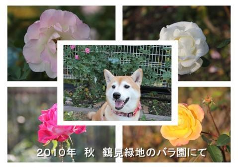 page 日和 鶴見緑地 秋のバラ園にて