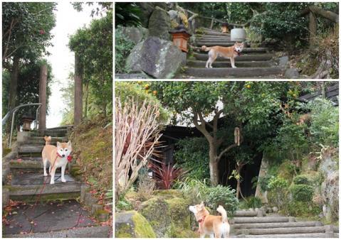page 2011-02-17 四季の蔵