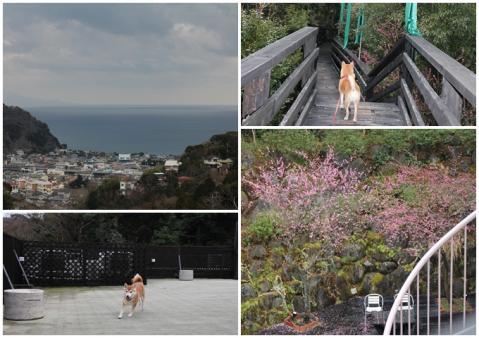 page 2011-02-17 四季の蔵3