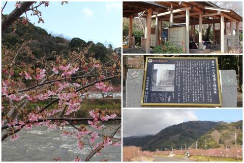 page 2011-02-18 河津桜2
