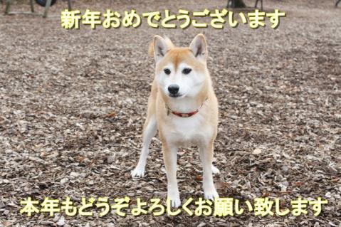 546_20110103235408.jpg