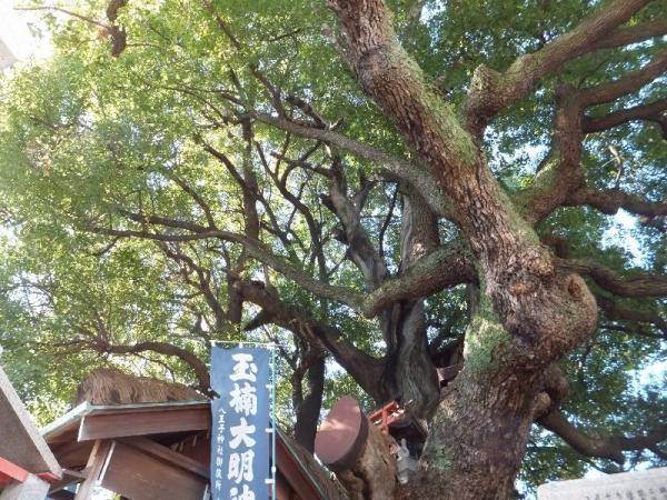Hachioji_004_org.jpg