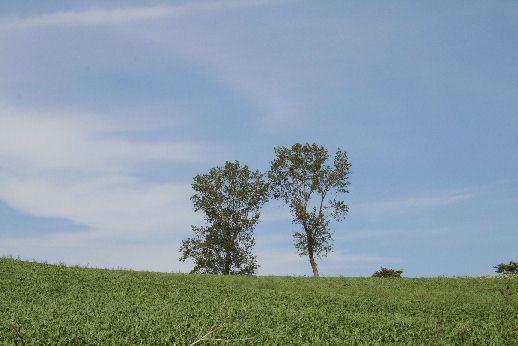パフィの木.jpg