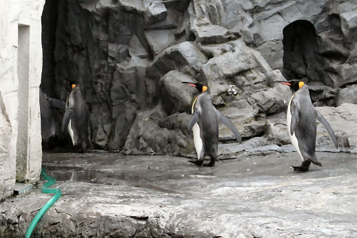 ペンギン.jpg