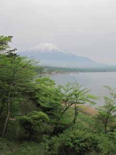 yamanaka 02