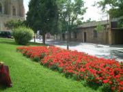 257+toredo flores convert