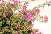 7830 Castillo de Jaacute;tiva