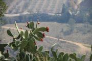 7913 Castillo de Jaacute;tiva