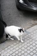 0705 Plaza de Espana Cadiz