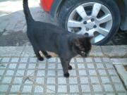 0823 Gato en Cadiz