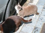 0291 Bruggeの猫たち
