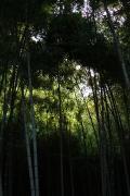 14 王禅寺ふるさと公園