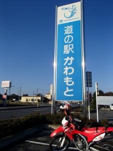 菊!! (1)