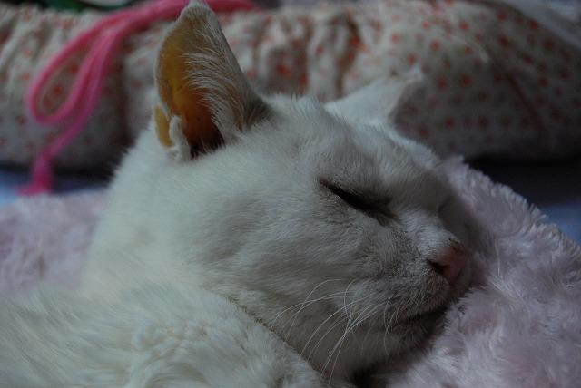 眠り姫 あいちゃん